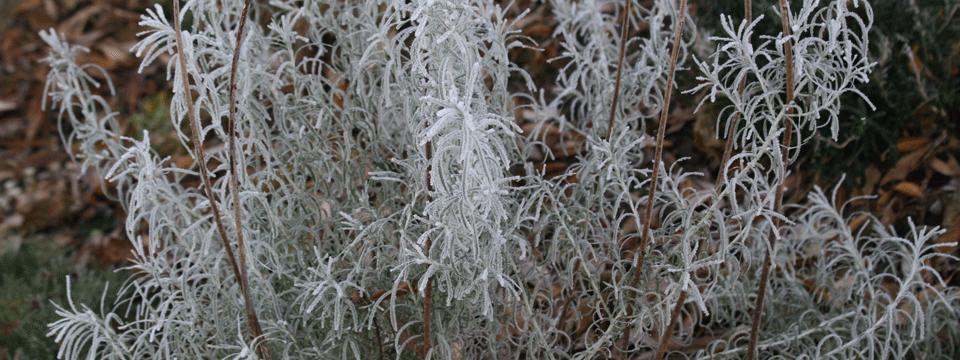 Schutz vorm harten Frost