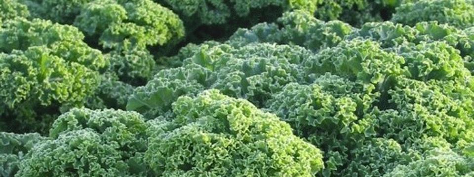 Grünkohlkuchen
