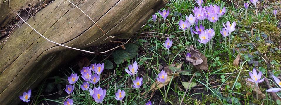 Der Frühling erwacht in den Gärten