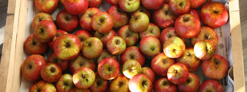 Winterliches Apfel Chutney